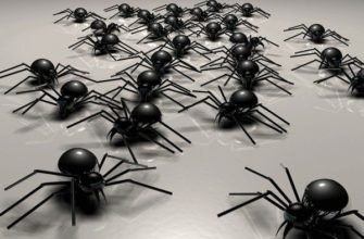 k chemu snitsya mnogo paukov i stoit li pugatsya takih grez